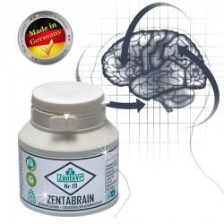 Zentabrain. Gesundes Gehirn Gihirnaktivität